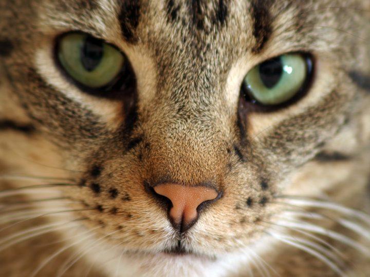 bigstock-Cat-736166